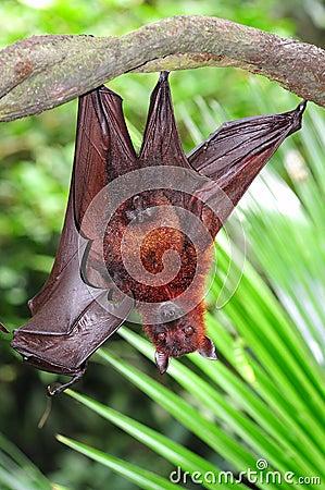 Free Bat Royalty Free Stock Photo - 7660445