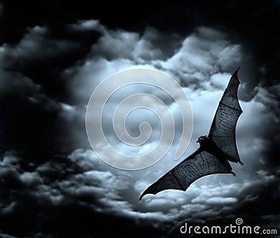 Bat flying in the dark sky
