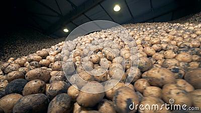 Batatas armazenadas em um armazém nas pilhas 4K filme