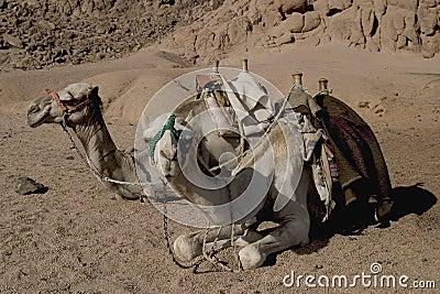 Bateaux du désert