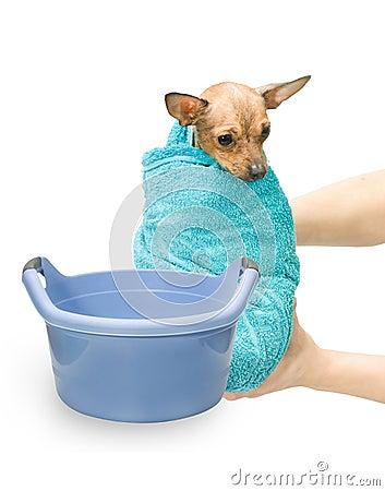 Bath Canine Hydrotherapy