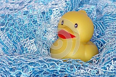 Bath time duck