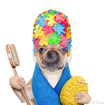 Free Bathing Dog Stock Photography - 48516492