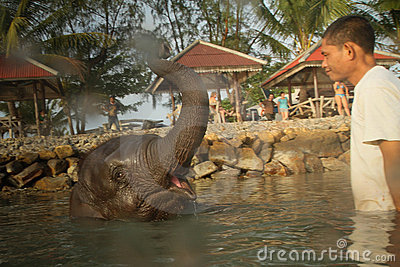 Bathing elephants in the Gulf of Siam Editorial Image