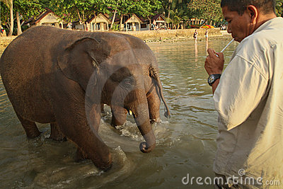 Bathing elephants in the sea on Ko Cang island Editorial Photo