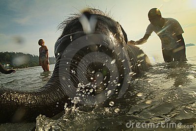 Bathing elephants in the sea on Ko Cang island Editorial Stock Photo