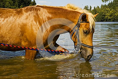 Bathing horse in nature