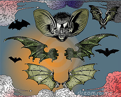 Bats and Flying Dog.