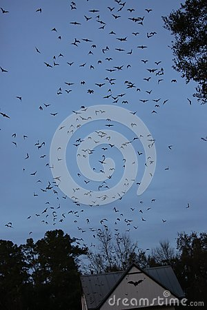 Free Bats Flying Out From Bat House Stock Photography - 107362262