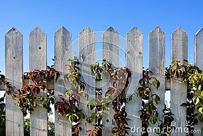 Batten fence