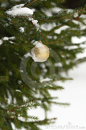 Bauble on a tree