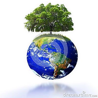 Baum auf Erde
