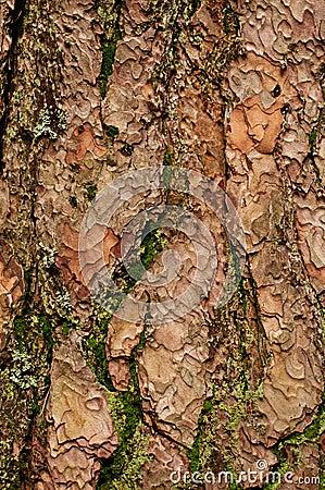 Baum-Barke mit Moos