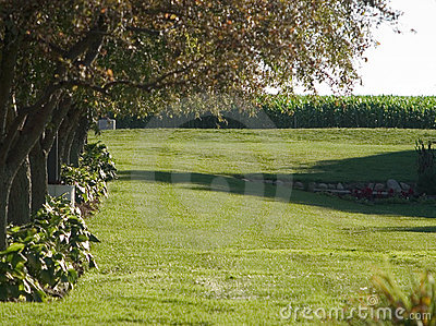 Baum gezeichneter Rasen