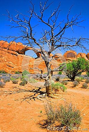 Baum und Bogen