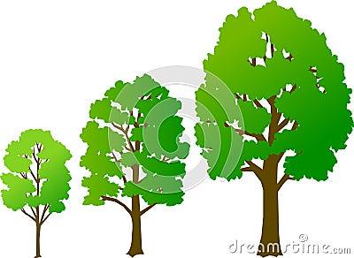 Baum-Wachstum/ENV