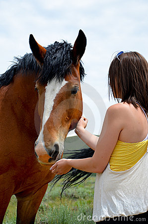 Bay Draft Horse and woman