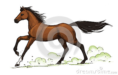 Bay Horse Gallop