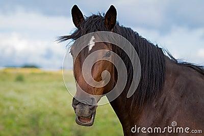 Bay horse grimace