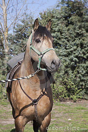 Bay horse II