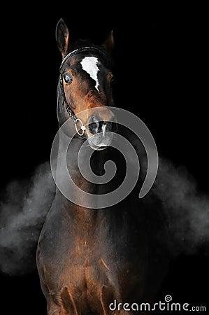 Free Bay Horse In Winter Stock Photos - 12455093