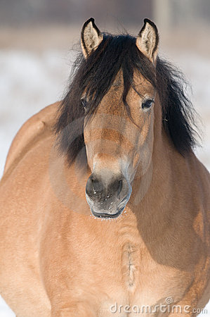 Free Bay Horse In Winter Royalty Free Stock Images - 17753109