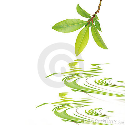 Free Bay Leaf Beauty Royalty Free Stock Images - 7862749