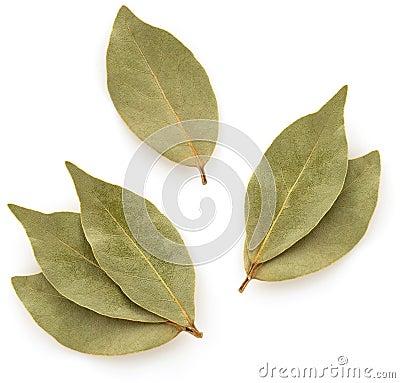 Free Bay Leaf On White Stock Photos - 43929303