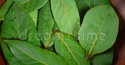 Bay leaf on plate slowly rotates. Macro background stock video footage