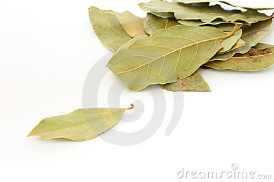 Bay leaf spice on white background