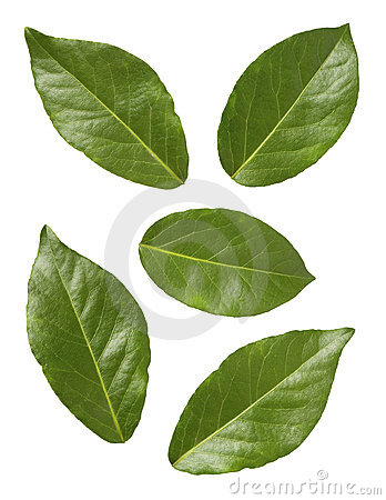 Free Bay Leaves Stock Photo - 1775090