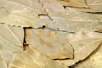 Bay leaves stock photo image 50876370 - Cook bay leaves ...