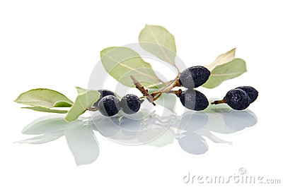 Bay leaves with fruits