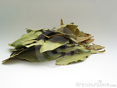 Bay leaves pile