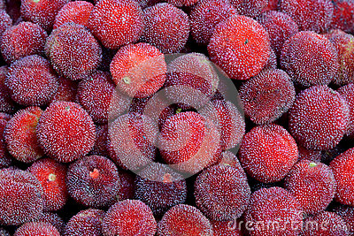 Bayberry in fresh