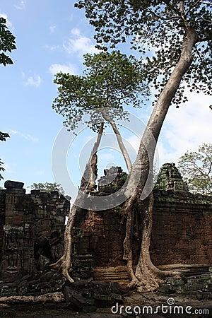 Bayon δέντρο