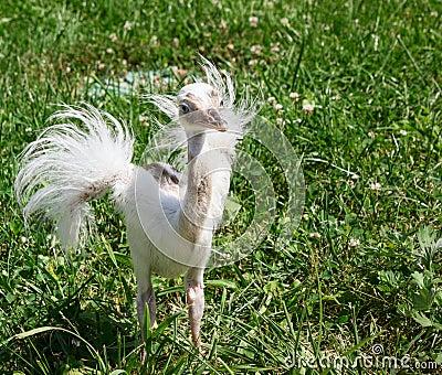 B b d 39 autruche photo stock image 43282700 - Bebe autruche ...