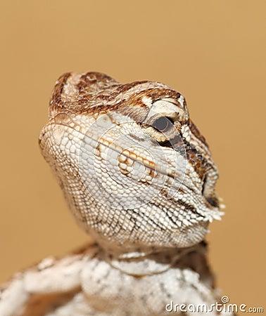 Free Bbay Dragon Royalty Free Stock Photo - 9771605
