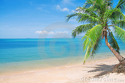Beaautiful beach with coconut palm and sea