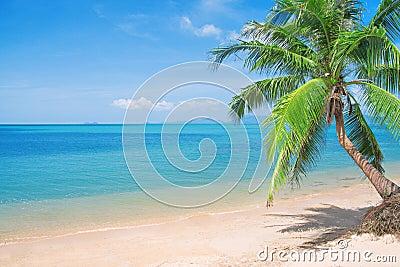 Beaautiful beach with coconut palm and sea