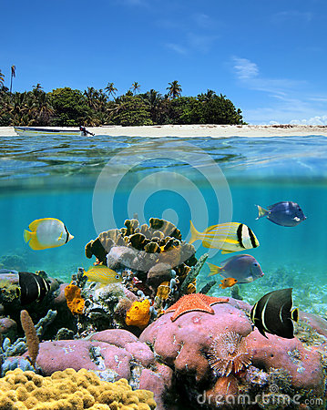 Free Beach And Coral Reef Royalty Free Stock Images - 25592549
