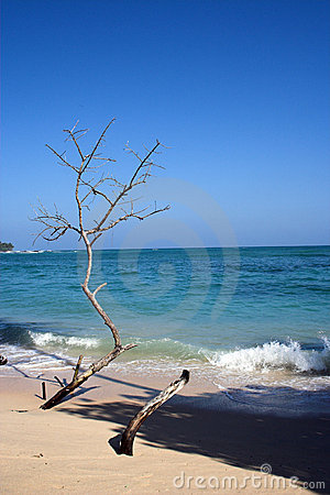Free Beach At Its Best Royalty Free Stock Image - 675906