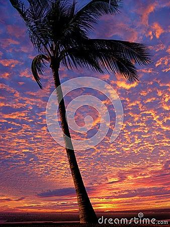 Free Beach At Sunset Royalty Free Stock Image - 46096