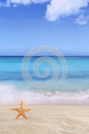 Free Beach Background Scene In Summer On Vacation With Sea Star Royalty Free Stock Photos - 55560668