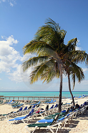 Beach on the Bahamas With Coconut Tree