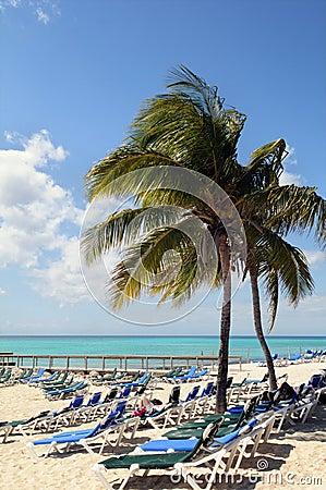 Beach on the Bahamas With Coconut Tree