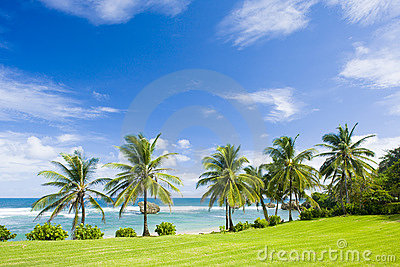 Beach of Bathsheba