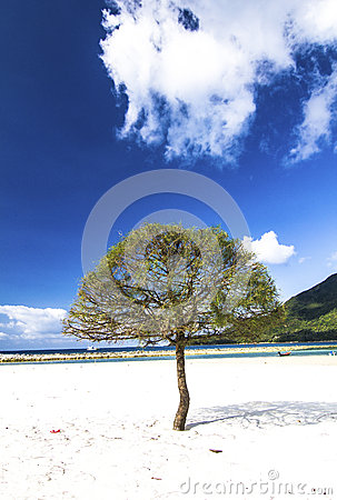 Beach beautiful blue sky and trees on sand