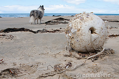Beach buoy and dog in background