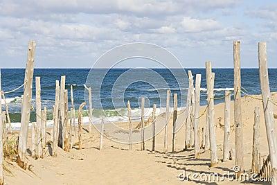 Beach at Cape cod